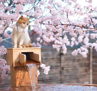 不追?;?,都对不起这个春天!